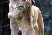 Cute Animals / Who doesn't love cute and cuddly critters? / by HalfOffDeals