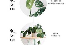 rośliny domowe i ogrodowe