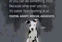 Foster dogs