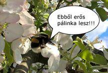 Pálinka for FUN