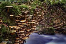 Llegó el otoño / Otoño en Pontevedra, Galicia