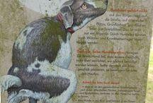 gustav/dackel / my dachshound gustav
