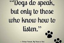 I love Dog ❣