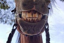 Grappige Paarden
