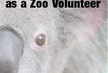 Animal Volunteering / Animal volunteering tips and info for animal volunteers.