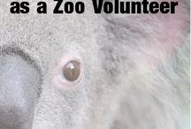 Animal Volunteering / Animal volunteering tips and info for animal volunteers.