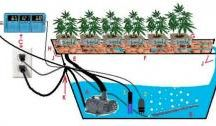 How To Grow Cannabis / From our experts: How to plant, grow and nurture your budding babies!