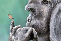 Pretty picture of animals