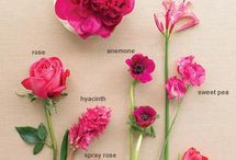 Flowers and Their Names