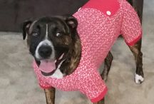 Dogs' fashion