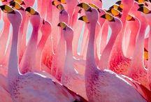 Flamingos everywhere