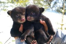 Baby Bears / Baby Bear Pictures