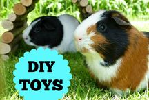 all about guinea pigs. / Cute photos, tips and tricks all about guinea pigs!
