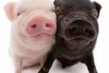 Lovely piglets