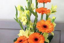 Glad arrangement