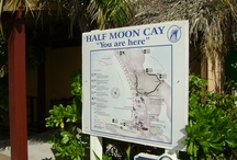 Half Moon Cay / Pics of Half Moon Cay. Holland America's Private Island1