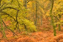More autumn images