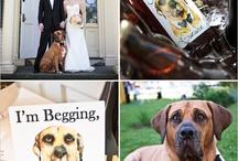W // Wedding - Signs