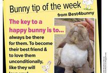 Bunnylife