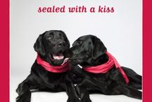 "The Dog Studio ""Love"" Greeting Cards / These adorable ""Love"" cards are great for any romantic or partnership occasion."