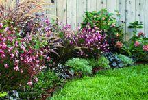 Kert / kerti ötletek, növények