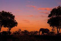 Safari-Erlebnisse im Südlichen Afrika / Das Südliche Afrika bietet unzählige Möglichkeiten für einzigartige Safaris! Hier findest du tolle Ideen für dein persönliches Safari-Abenteuer!