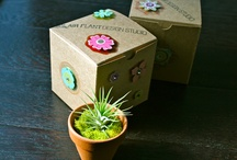 Mother's Day / by Air Plant Design Studio