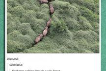 nature....