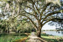 Middleton Place Engagements - Charleston, SC