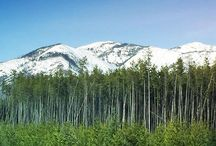 Our Neck of the Woods / Photos of the place we call home! Northwest Montana - Glacier National Park - Flathead Lake