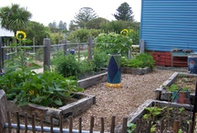 school garden ideas / by Susan Echols