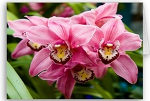 Exotic Flowering Orchids / by Butterflies Are Blooming