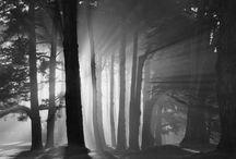 Bosques prohibidos