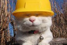 Construction Cats