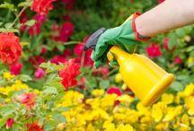 Bisnis Tanaman / Panduan bisnis tanaman dan informasi mengenai peluang bisnis tanaman