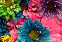 Flowers / by Georgia Applegate
