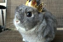 Bunny Lover  [ fákingcukiii ]