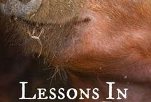 Raising Livestock / Learn about raising and caring for livestock on the farm!