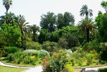 Mediterranean garden / There are always flowers for those who want to see them.  Henri Matisse