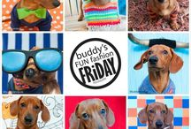 "#buddysfff #buddysfunfashionfriday / This is Buddy's Fun Fashion Friday, better known as #BuddysFFF.   Buddy is a red haired doxie and on Friday's he is the host of the ""FFF"" parties.  Every week the party has a new unique theme over on Instagram. Stop by and check them out at @buddyandpals & #buddysfunfashionfriday!  #funpets #funnypets"