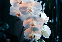 Orchids / by Judith Newman