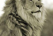 Lion Tats
