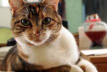 Cat my love