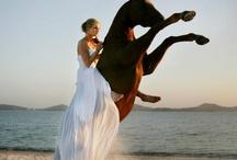 Horses Portrait