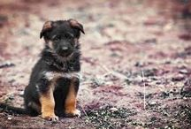 Our Puppy Wishlist / A list of all things wanted and needed to be purchased before getting our first puppy :)