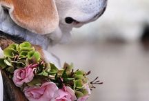 Canine Corsages