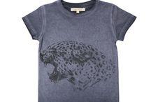 KATTEDYR / Diverse løver, tiger og andre kattedyr