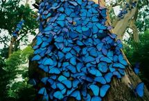 Love for Butterflies / by Rachael Funnell