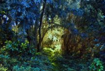 Enchanted woodland / by Claudia Rubinstein