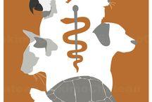 Veterinarian Medicine